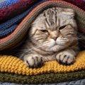 猫を『欲求不満』にさせない生活環境5選!ストレスになりやすい要因…