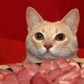 猫に牛肉を食べさせても大丈夫?与え方や注意する事