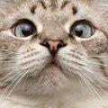 あなたの愛猫はどう?猫がする変な癖8選