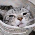 気を抜くとなっちゃう!猫ちゃんのシャクレ顔