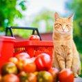 猫にトマトを与えても大丈夫?効果や与える時の注意