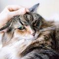猫の額の意味や由来、英語での表現まで