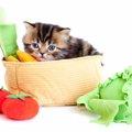 猫はキャベツを食べる必要がある?与え方や注意する事