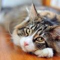 猫の耳がピクピクしてる時の気持ちと注意点