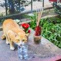 猫にお香が危険な理由と注意する3つの事