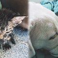 極暑の街で瀕死の子猫を保護…保護犬の看病で奇跡の回復!