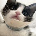 【愛の奇跡】下半身麻痺を感じさせないほど元気に遊ぶ子猫に感動の嵐!