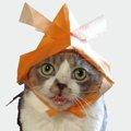 舌がしまえない、酷い状態だった猫との出会い