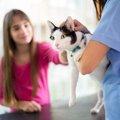 猫の去勢のメリットとデメリットについて