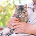 猫の『老化サイン』12個
