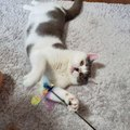 好奇心旺盛な猫がする仕草や行動4つ