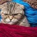 猫が眉間にしわを寄せている時の4つの気持ち