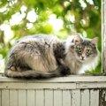大の猫好き石田ゆり子さんの飼っている猫たち!