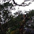 昨日からずっと木の上…降りられないのに救助に『NO!』と言い続ける猫
