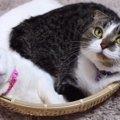 ざるを楽しく使う猫さんたち!