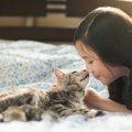 猫がなめるのはナゼ?どういう意味があるの?ナゾを解き明かします!