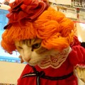 「全然楽しくないにゃ」猫ちゃん、可愛くドレスアップするも…「ムスッ」