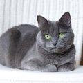 猫が香箱座りをする理由と由来