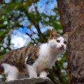 猫リパブリックが他の猫カフェと違う理由