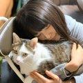 桜井日奈子さんも猫を飼ってた!名前や品種、画像などを紹介