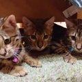 仲良し3きょうだい!ソファーの下に並んで遊ぶ!