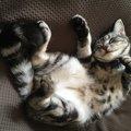 猫の『撫でてほしいサイン』3つ