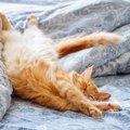 猫が熟睡できる5つのシチュエーション
