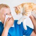 猫の口臭の原因と対策について