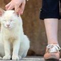 野良猫に餌をあげる時に絶対気をつけてほしい5つのこと