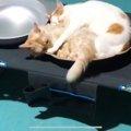 嫌われ金属バットで追われる兄弟猫…危険な環境から救出!