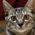 猫の耳は地獄耳!?猫の優れた聴覚について
