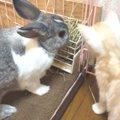 『うさぎさん、それ美味いニャ?』好奇心旺盛な猫ちゃんが興味を示し…