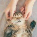 猫にツボ押しマッサージをする効果や方法