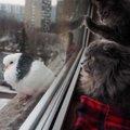 猫の家出…好奇心を止めらない猫への脱走対策5つ