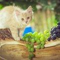 猫にぶどうはダメ!与えてはいけない理由と食べてしまった時の対処法