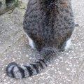猫の尻尾を引っ張るのは絶対にダメ!理由と起きうる障害について