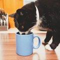 猫が飼い主のコップでお水を飲む3つの理由