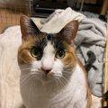 『猫と暮らして学んだこと』ランキングTOP5!愛猫から得た大切な教え…