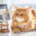 猫に関する6つのギネス記録!凄い猫ちゃんをご紹介