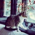 子猫はいつから留守番出来るのか 気をつけるべき3つのポイント
