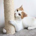猫が爪とぎをする理由と防止対策