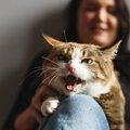 猫に干渉しすぎると起こるデメリット3つ