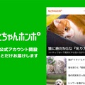 ねこちゃんホンポのLINE公式アカウントがオープンしました!【友だち…
