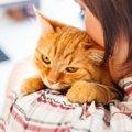 猫を台風等の自然災害から守ろう!