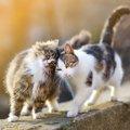 猫がすり寄る6つの意味