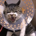 病院で激おこ!猫ちゃん本気のシャー!!