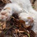 猫の開きができる理由とその作り方