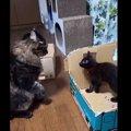 にゃんと大胆!揉めた末に車窓から逃走を図る新米配送猫が話題