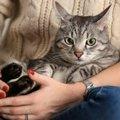 米国食品医薬品局(FDA)推奨:猫と犬にもソーシャルディスタンスを