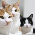 猫が香箱座りをするのはなぜ?飼い主を幸せにする魔法の姿に迫る